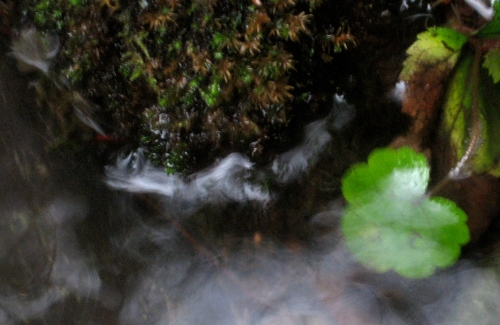 Water Moving a Leaf By Stream: by Karen E. Bean, photographer, Walking-Wild.com